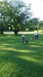 合同犬チェンジ