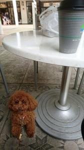 あずきカフェ