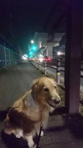 よもぎ夜散歩