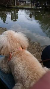 くう釣り池