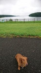 ココ多摩湖②
