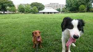 ラムココ鶴巻西公園