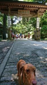 ココ高尾山⑥