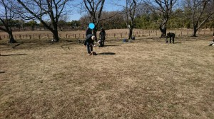 彩湖公園②