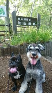 チューイ&ニコ