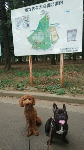 ニコ&モコ①